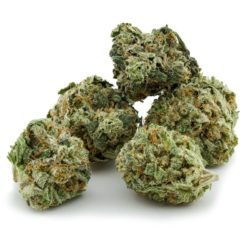Maui Wowie is an uplifting dominant sativa strain which originated in the 1970s on the Hawaiian island where it was named.